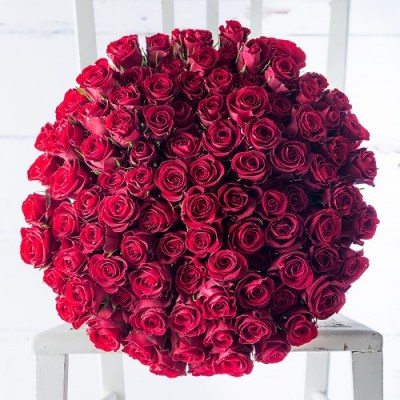 100_red_roses_1